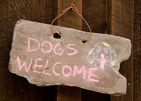 Hunde sind willkommene Gäste