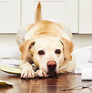 Hund beschädigt Porzellan