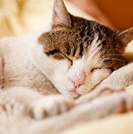 Katze erholt sich nach der Operation