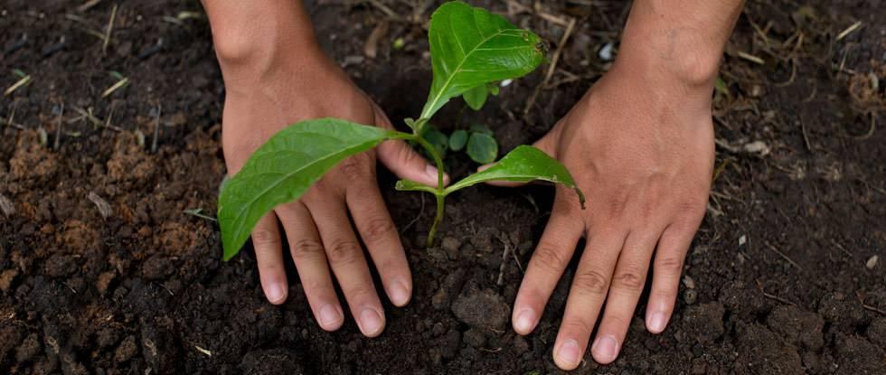 ein Baum wird gepflanzt