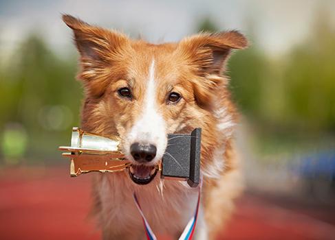 Hund übergibt Pokal