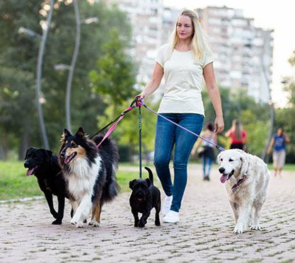 Frau geht mit HUnden spazieren