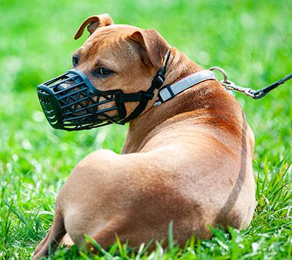 Hund mit Maulkorb