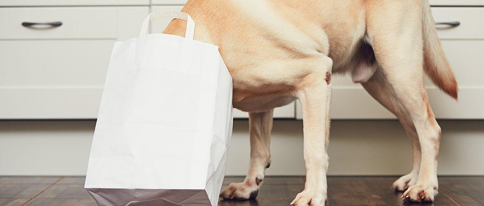 Hund spielt mit der Papiertüte