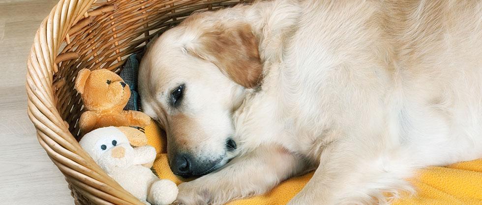 Hund liegt im Korb
