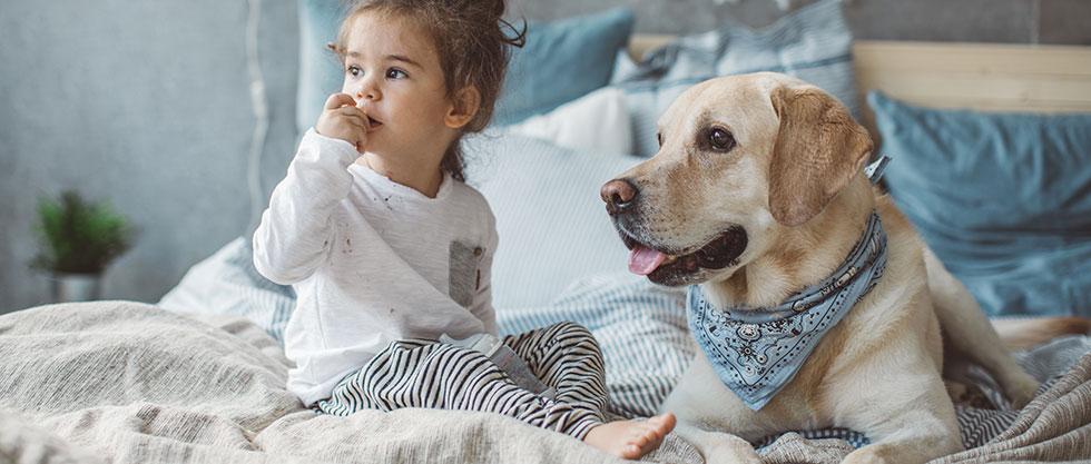 Der Hund sitzt mit dem Kind im Bett