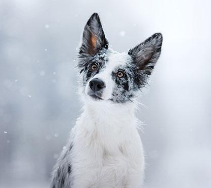 Kleiner Hund friert im Winter