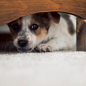 Hund versteckt sich
