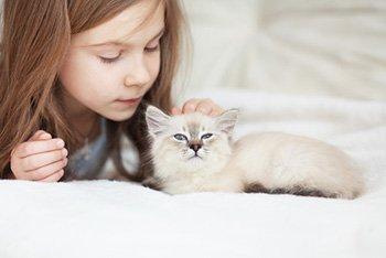 Katzenversicherung