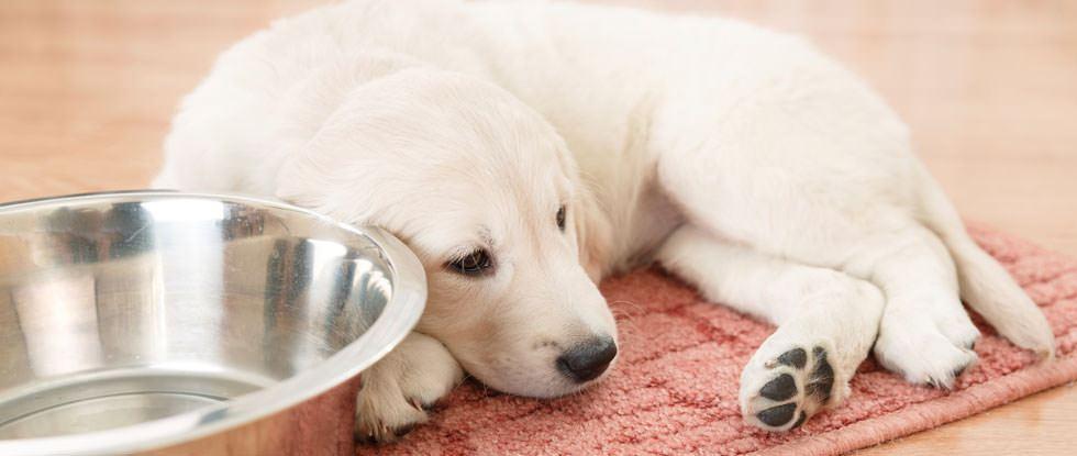 Kranker Hund liegt auf Platz mit Schüssel