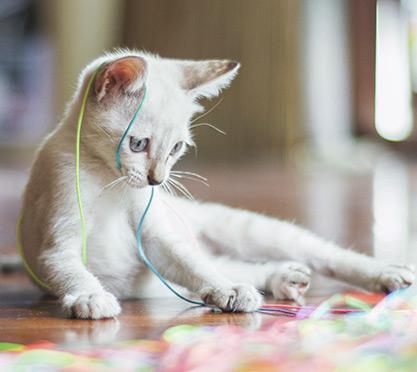 Katze spielt mit Faden