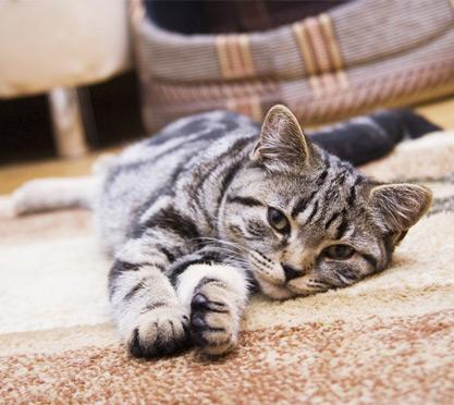 Katze liegt auf dem Boden