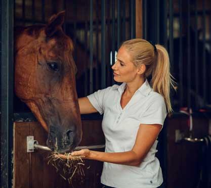 Pferd frisst Apfel