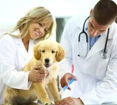Welpe beim Tierarzt