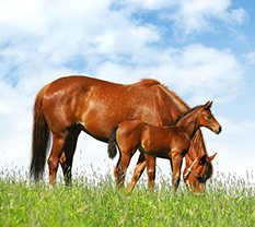 Pferd wird von Tierärztin untersucht