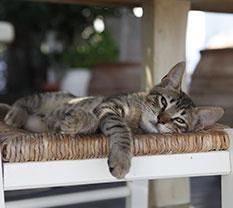 Katze auf dem Stuhl