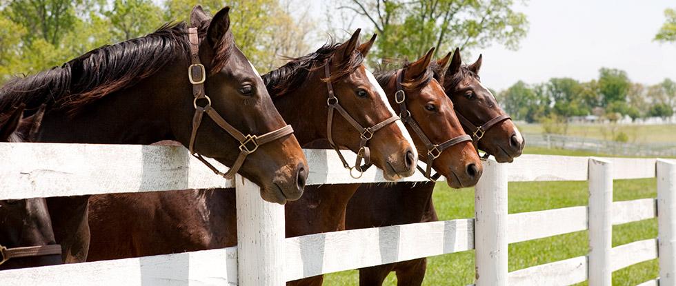 Pferde vor dem Zaun