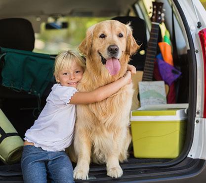 Stressfrei mit dem Hund im Auto
