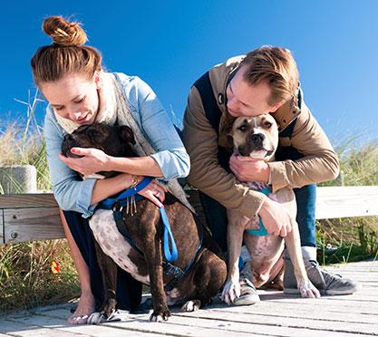 Spaziergang mit zwei Hunden