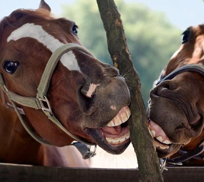 Pferdegebiss