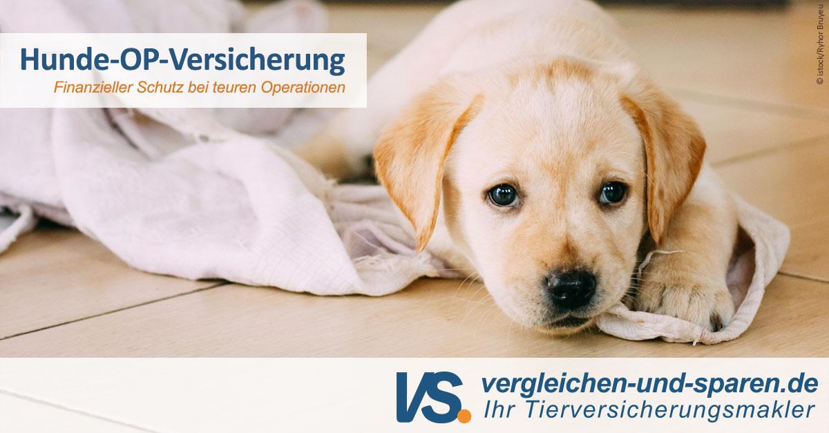Hunde Op Versicherung Im Vergleich Schon Ab 781 Vs