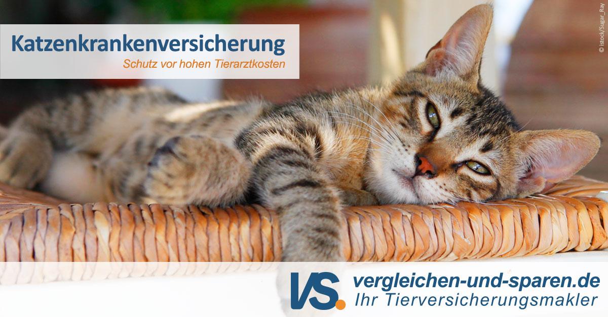 Die Häufigsten Katzenkrankheiten In Der übersicht Vs