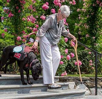 Assistenzhund und ältere Frau