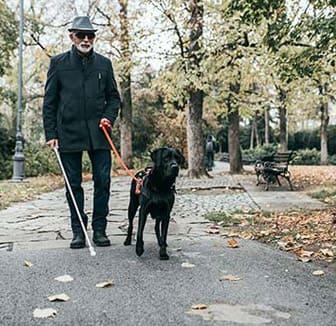 Blindenführhund und Mann im Park