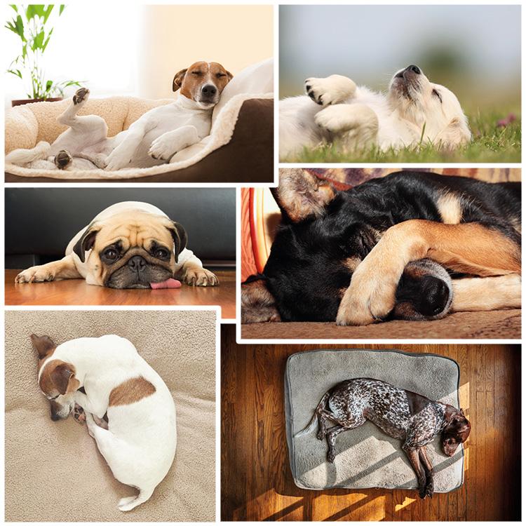 Collage - Schlafposition bei Hunden