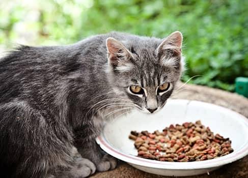Katze bekommt Diätfutter