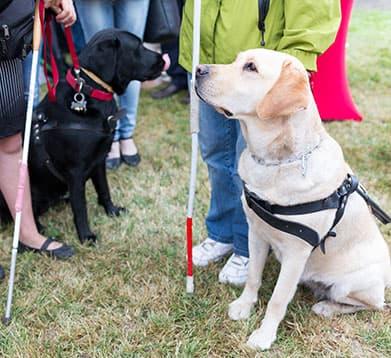 Hunde mit Halsband und Geschirr