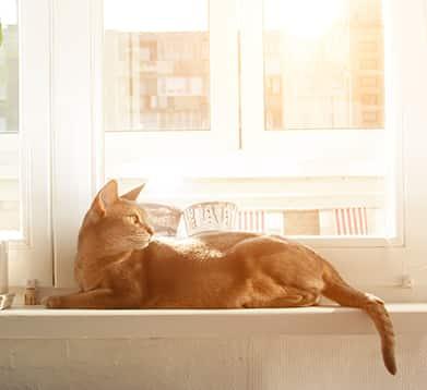 Katze liegt auf der Fensterbank in der Sonne