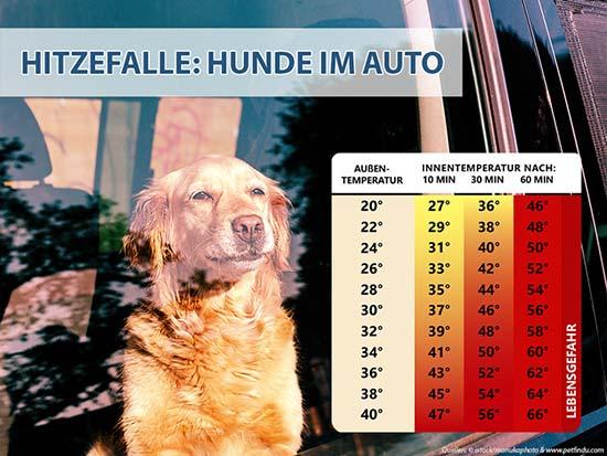 Infografik, die den Anstieg der Innentemperatur des Autos in Relation zur Außentemperatur verdeutlicht