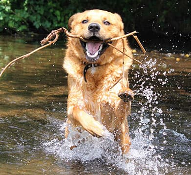 Hund spielt im Wasser