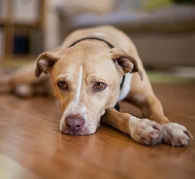 Hund liegt auf dem Boden und wirkt traurig