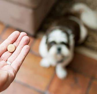 Hund bekommt die Wurmkur