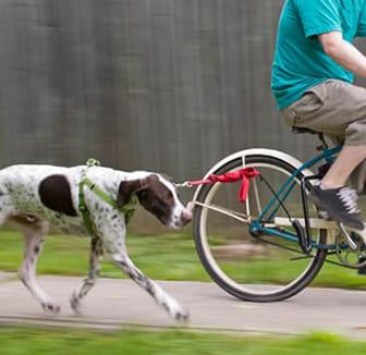 Radfahrer mit dem Hund an der Leine