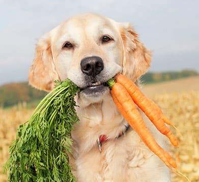 Hunde mit Möhren