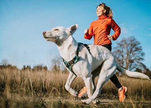 Hund joggt