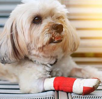 Kralle beim Hund verletzt