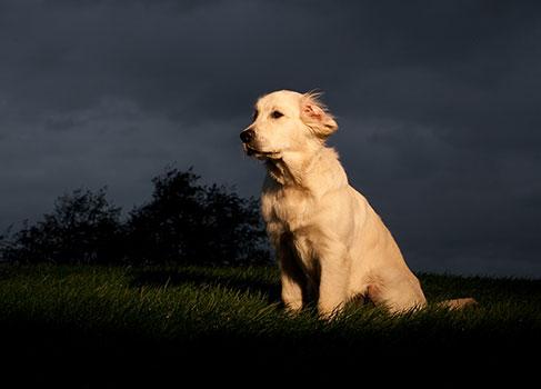 Hund in der Nacht