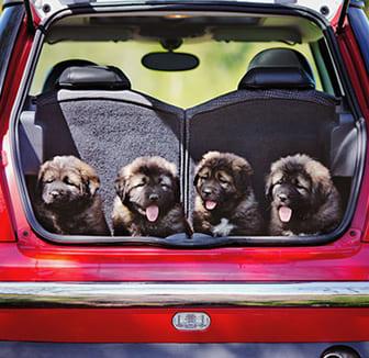 Mit den Hunden auf Reise