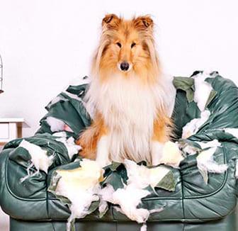 Hund sitzt auf dem Sessel
