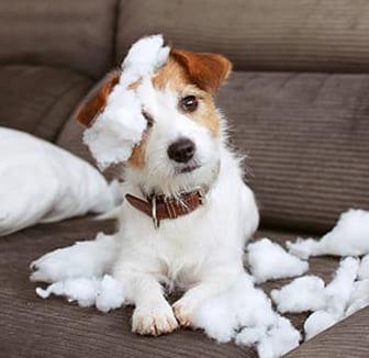 Der Hund auf dem Sofa