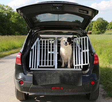 Der Hund ist im Auto gut gesichert