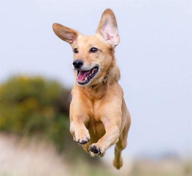 Hund rennt über die Wiese