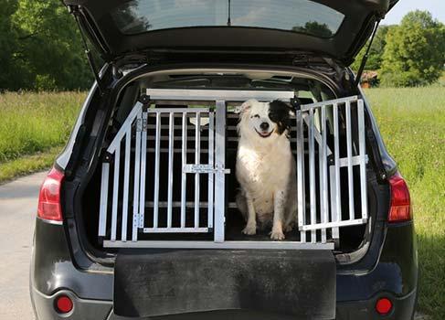 Hund sitzt im offenem Kofferraum mit Gitterbox