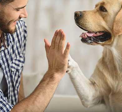 Hund und Herrchen berühren sich mit Hand und Pfote