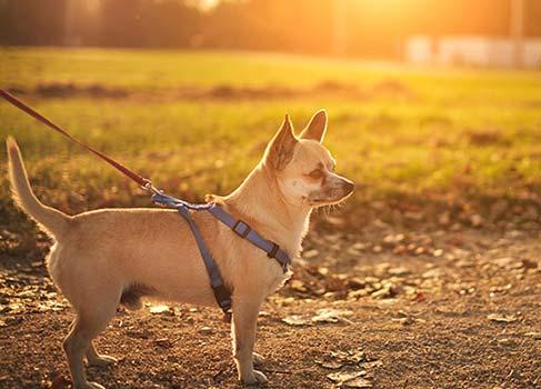 Kleiner Hund im Park an der Leine