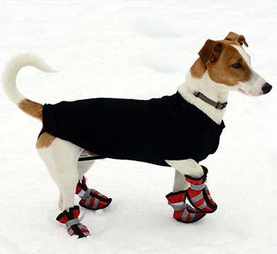 Hund mit Schneeschuhen und Mantel
